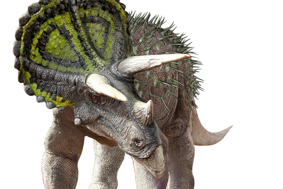 Dinosaur rEvolution at the SAMuseum